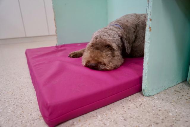 hundblog - 9