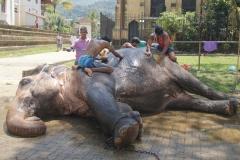 Elefant in Tempel