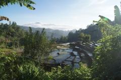 Teeplantagen im Hügelland